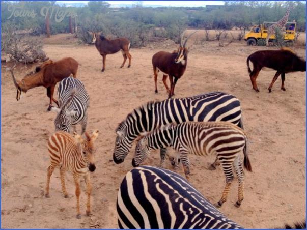 africa wildlife travel tours 15 Africa Wildlife Travel Tours