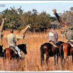 africa wildlife travel tours 4 150x150 Africa Wildlife Travel Tours