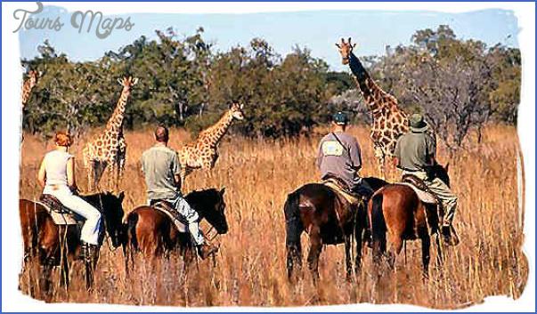 africa wildlife travel tours 4 Africa Wildlife Travel Tours