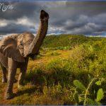 africa wildlife travel tours 5 150x150 Africa Wildlife Travel Tours