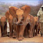 africa wildlife trust travel  0 150x150 Africa Wildlife Trust Travel