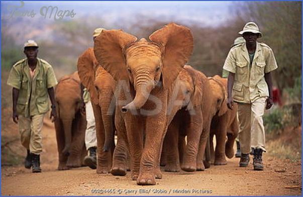 africa wildlife trust travel  0 Africa Wildlife Trust Travel