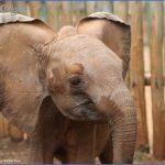 africa wildlife trust travel  12 150x150 Africa Wildlife Trust Travel