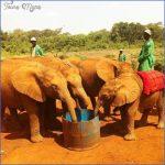 africa wildlife trust travel  16 150x150 Africa Wildlife Trust Travel