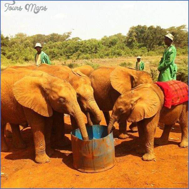 africa wildlife trust travel  16 Africa Wildlife Trust Travel