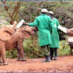 africa wildlife trust travel  17 150x150 Africa Wildlife Trust Travel
