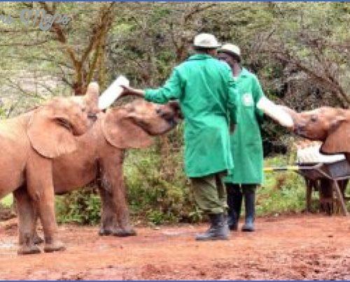Africa Wildlife Trust Travel _17.jpg