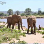 africa wildlife trust travel  18 150x150 Africa Wildlife Trust Travel