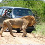 africa world wildlife travel tours 0 150x150 Africa World Wildlife Travel Tours