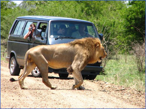 africa world wildlife travel tours 0 Africa World Wildlife Travel Tours