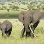 africa world wildlife travel tours 10 150x150 Africa World Wildlife Travel Tours