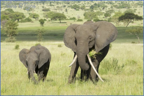 africa world wildlife travel tours 10 Africa World Wildlife Travel Tours