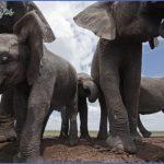 africa world wildlife travel tours 4 150x150 Africa World Wildlife Travel Tours