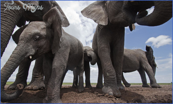africa world wildlife travel tours 4 Africa World Wildlife Travel Tours