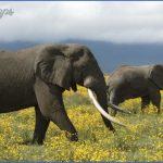 africa world wildlife travel tours 9 150x150 Africa World Wildlife Travel Tours