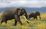 Africa World Wildlife Travel Tours_9.jpg