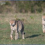 Kenya African Wildlife Foundation Travel_1.jpg
