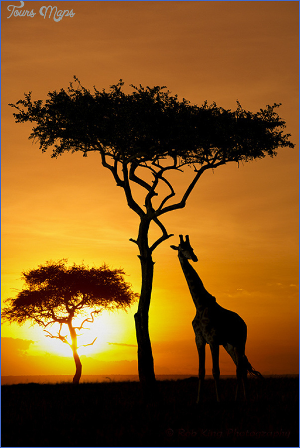 Kenya Nature Wildlife And Travel Photographer_2.jpg