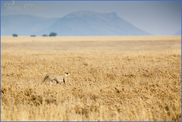 Kenya Nature Wildlife And Travel Photographer_3.jpg