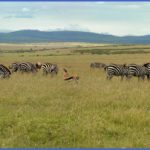 Kenya Nature Wildlife And Travel Photographer_4.jpg