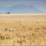 Kenya Nature Wildlife And Travel Photography_11.jpg