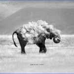 Kenya Nature Wildlife And Travel Photography_13.jpg