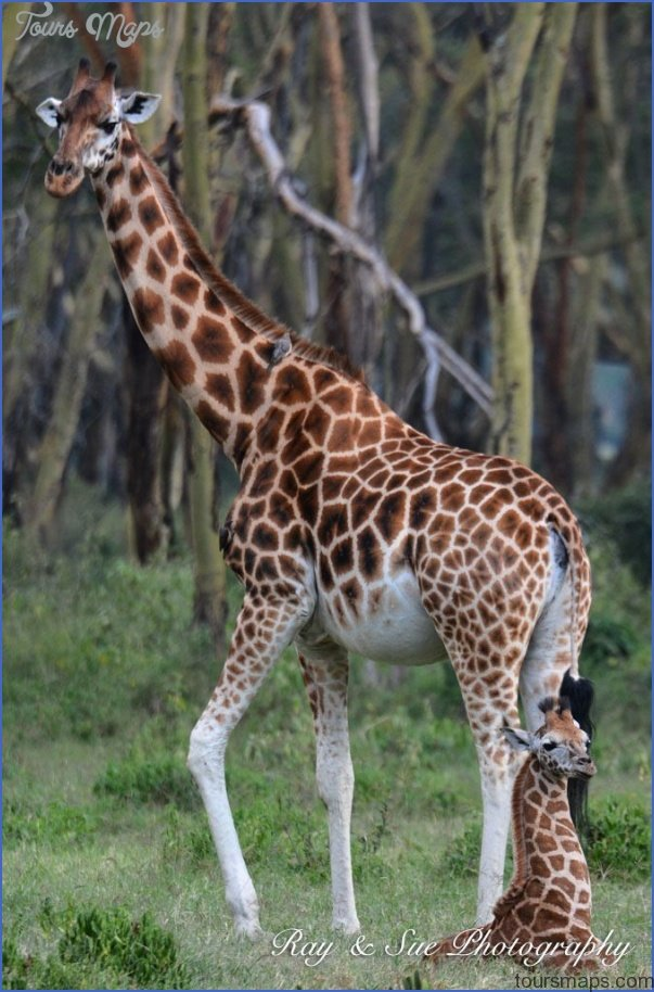kenya nature wildlife and travel photography 9 Kenya Nature Wildlife And Travel Photography
