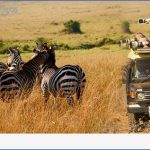 kenya wildlife travel packages  0 150x150 Kenya Wildlife Travel Packages
