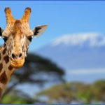 kenya wildlife travel packages  15 150x150 Kenya Wildlife Travel Packages