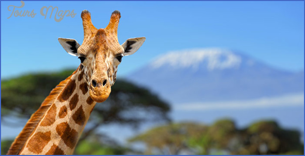 kenya wildlife travel packages  15 Kenya Wildlife Travel Packages