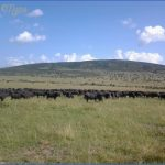 kenya wildlife travel packages  16 150x150 Kenya Wildlife Travel Packages