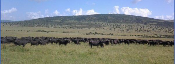 Kenya Wildlife Travel Packages _16.jpg