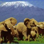 kenya wildlife travel packages  17 150x150 Kenya Wildlife Travel Packages
