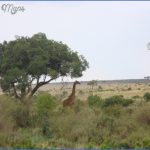 Kenya Wildlife Travel Packages _7.jpg