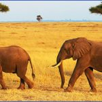 kenya wildlife travel packages  9 150x150 Kenya Wildlife Travel Packages