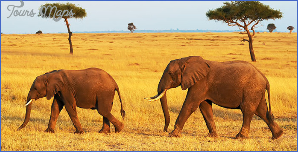 kenya wildlife travel packages  9 Kenya Wildlife Travel Packages