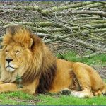 Mumbai Wildlife Travel Guide _10.jpg