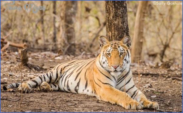 Mumbai Wildlife Travel Guide _12.jpg