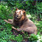 Mumbai Wildlife Travel Guide _15.jpg