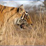 Mumbai Wildlife Travel Guide _4.jpg