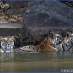 Mumbai Wildlife Travel_4.jpg