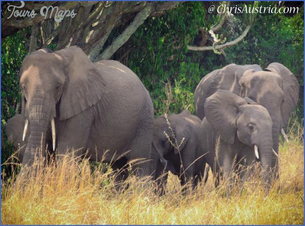 nature wildlife and travel photographer 13 Nature Wildlife And Travel Photographer