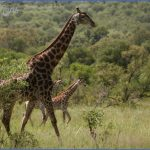 nature wildlife and travel photography  12 150x150 Nature Wildlife And Travel Photography