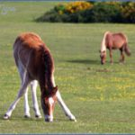 new forest guide for tourist  0 150x150 New Forest Guide for Tourist