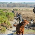 new forest guide for tourist  1 150x150 New Forest Guide for Tourist