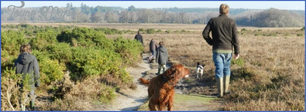 new forest guide for tourist  1 New Forest Guide for Tourist