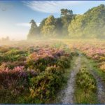 new forest guide for tourist  11 150x150 New Forest Guide for Tourist
