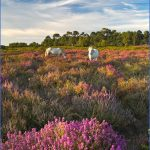 new forest guide for tourist  5 150x150 New Forest Guide for Tourist