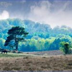 new forest guide for tourist  9 150x150 New Forest Guide for Tourist