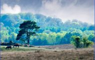 New Forest Guide for Tourist _9.jpg